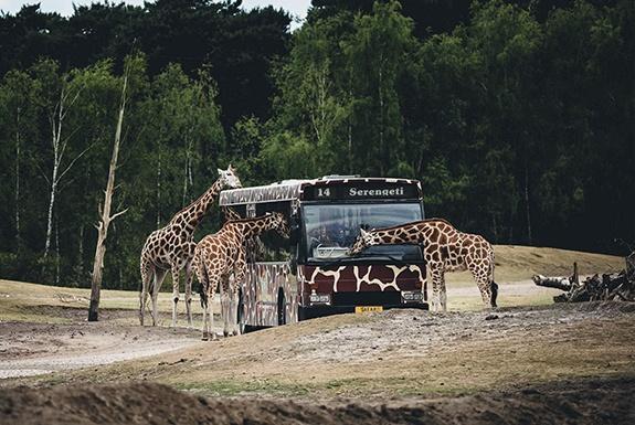 Safaripark Beekse Bergen - Camping de Eekhoorn